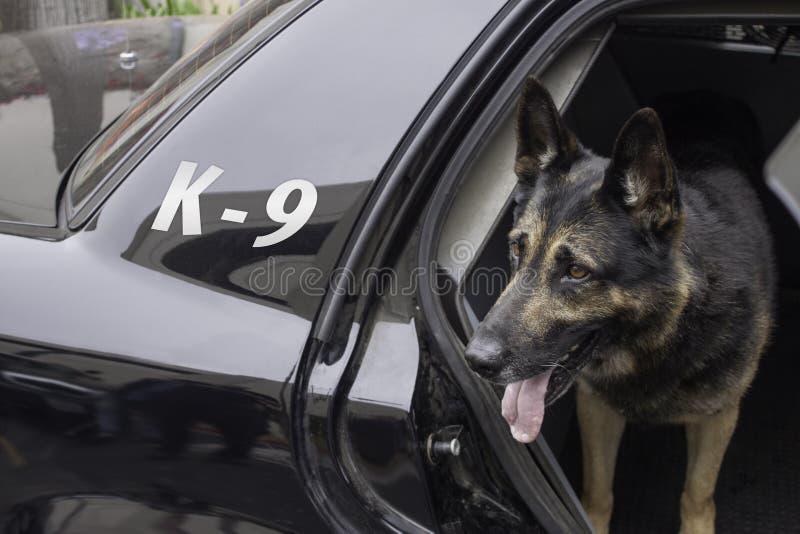 Polizei K-9 im Streifenwagen lizenzfreies stockfoto