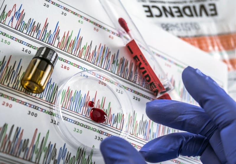 Polizeiexperte überprüft Blutbeispielscheibe Petri auf der Suche nach DNA-Test lizenzfreies stockbild