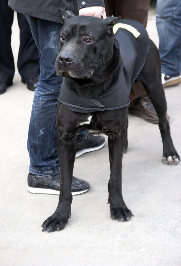 Polizeihund lizenzfreie stockfotografie