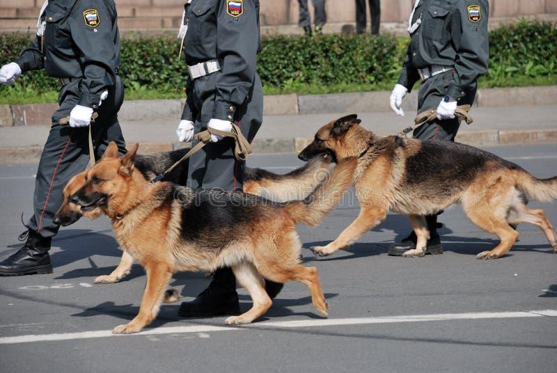 Polizia con i cani che camminano sulla via fotografia stock libera da diritti