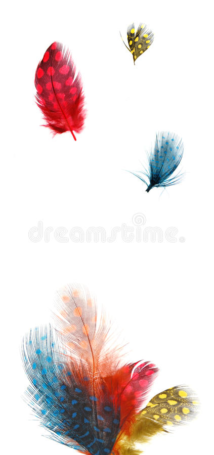 Download Polka dot feathers stock photo. Image of light, white - 13846408