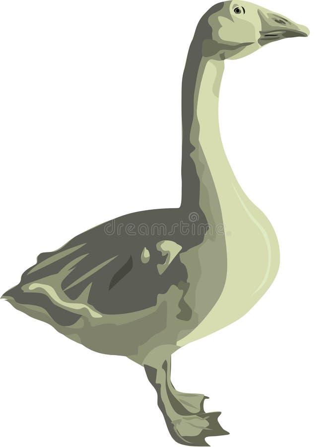 Pollame l'oca grigia illustrazione vettoriale