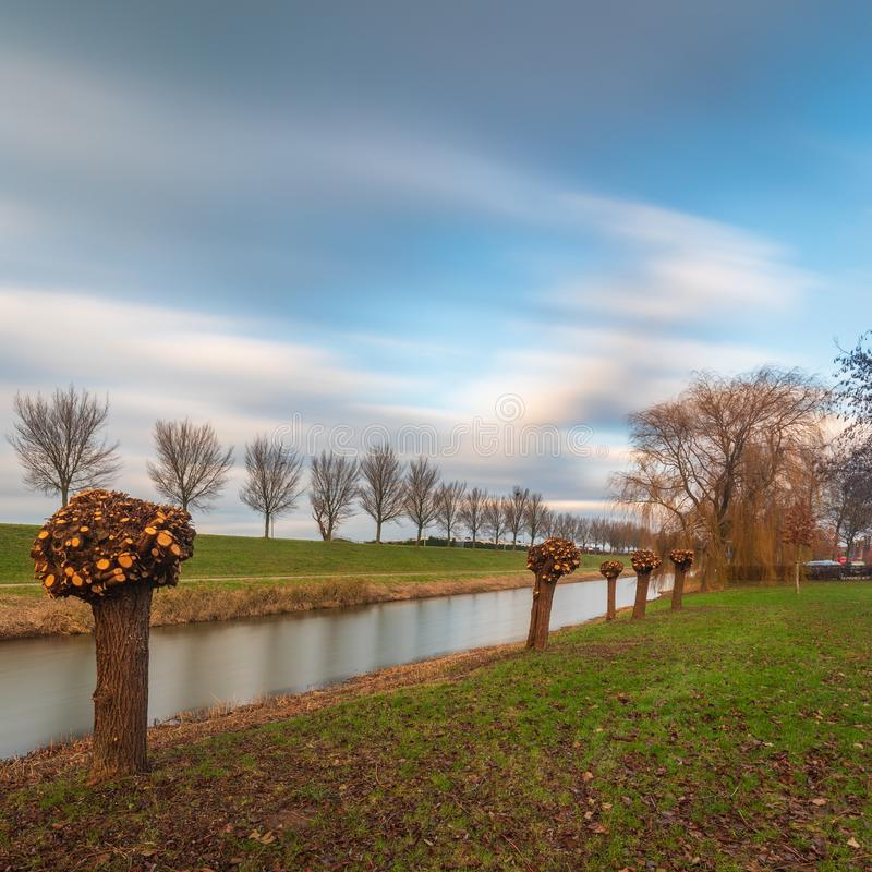 Pollard willows in the polder of Flevoland. In Holland royalty free stock image