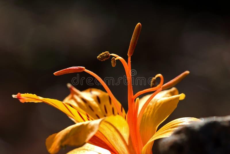 Download Pollen stock image. Image of flower, pollen, close, blossom - 22064505