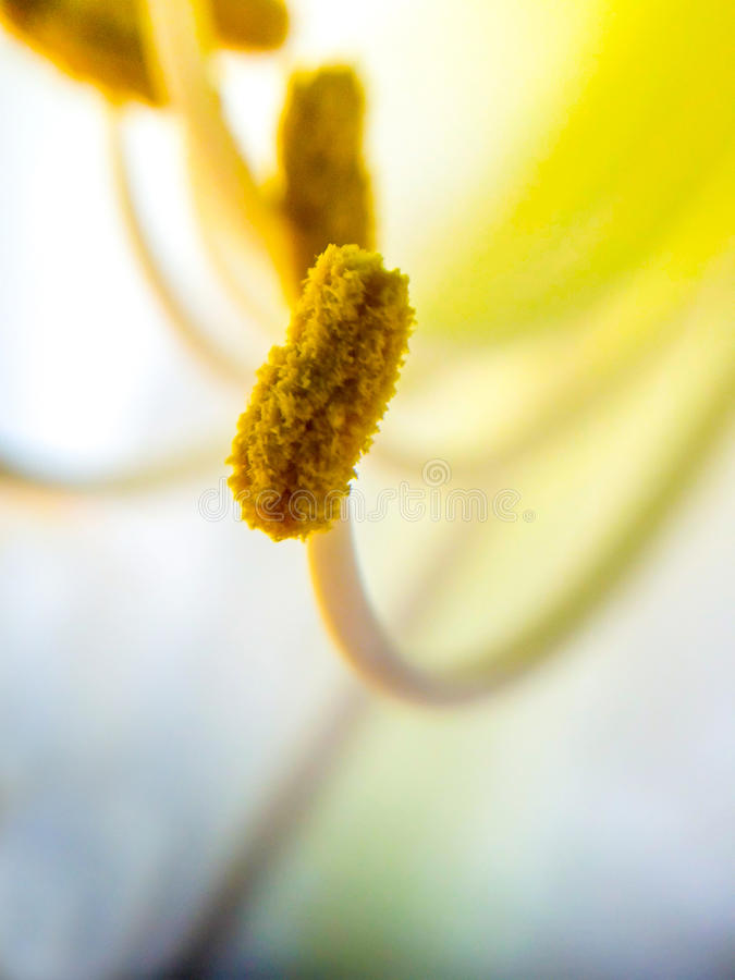 pollen images stock