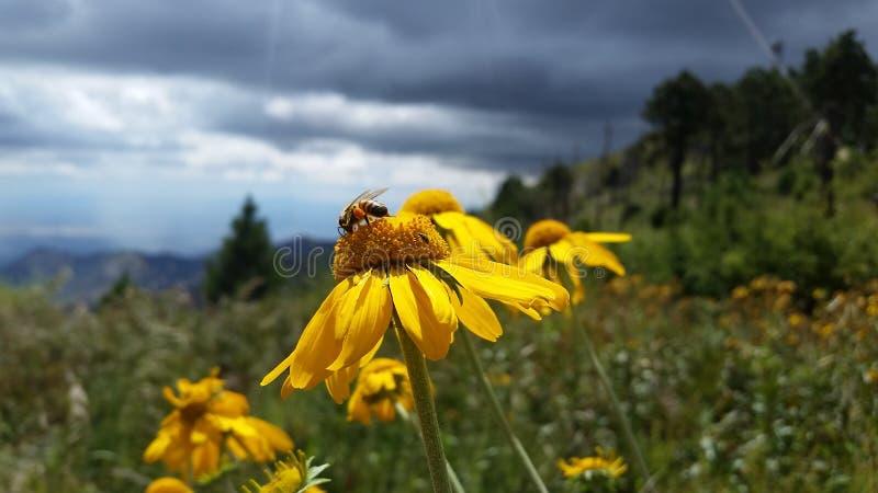 pollen fotografia royalty free