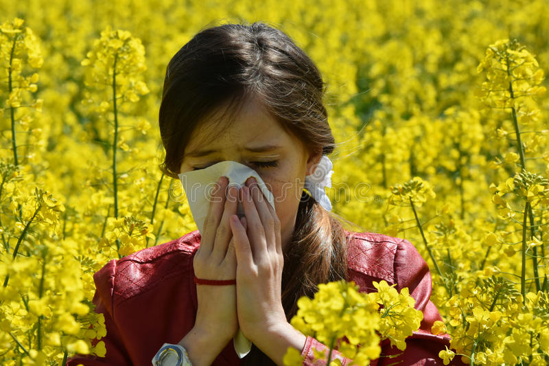 Pollen alergia zdjęcia stock