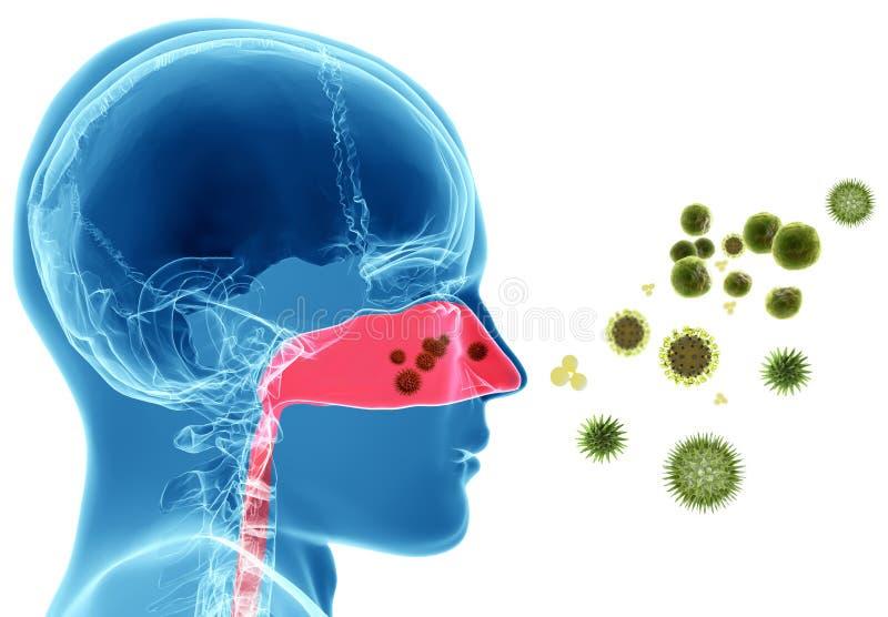 Pollen alergia, siano febra/ ilustracja wektor