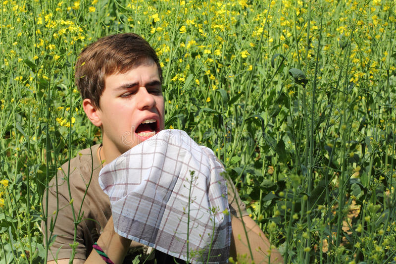 Pollen Allergy royalty free stock photo