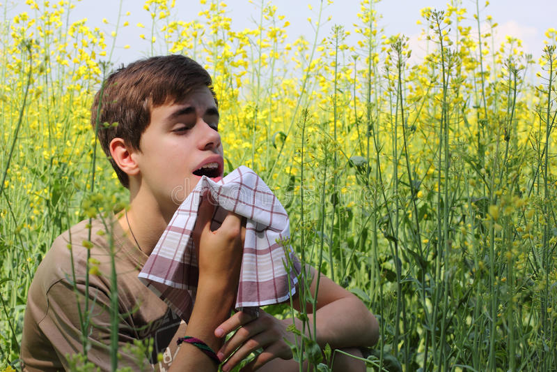 Pollen Allergy stock image