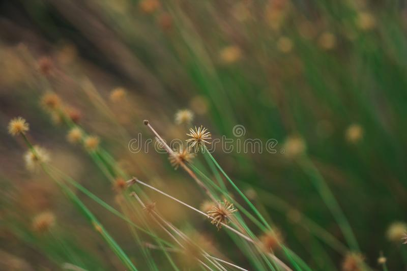 The pollen of the grass begins to dry. royalty free stock photo