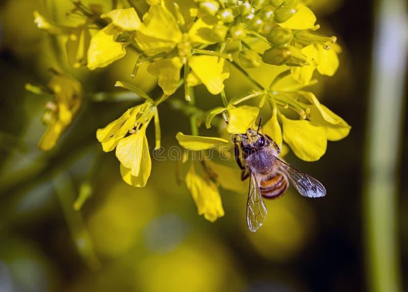 Pollen kolekcja obraz stock