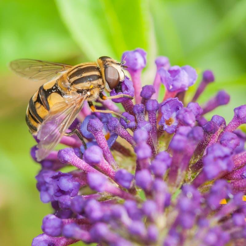 Download Pollen myśliwy zdjęcie stock. Obraz złożonej z płatek - 28192194