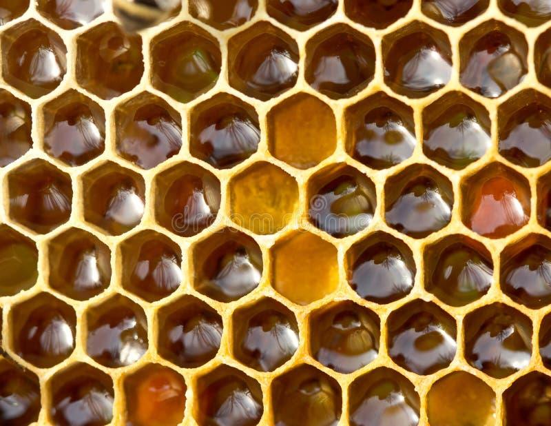 pollen Nectar et miel dans le nouveau peigne image stock