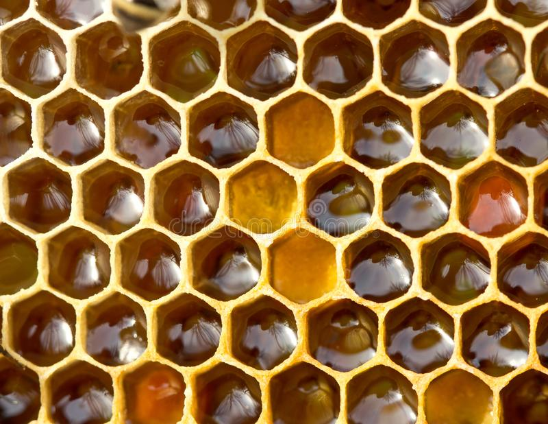 pollen Nectar et miel dans le nouveau peigne photos stock