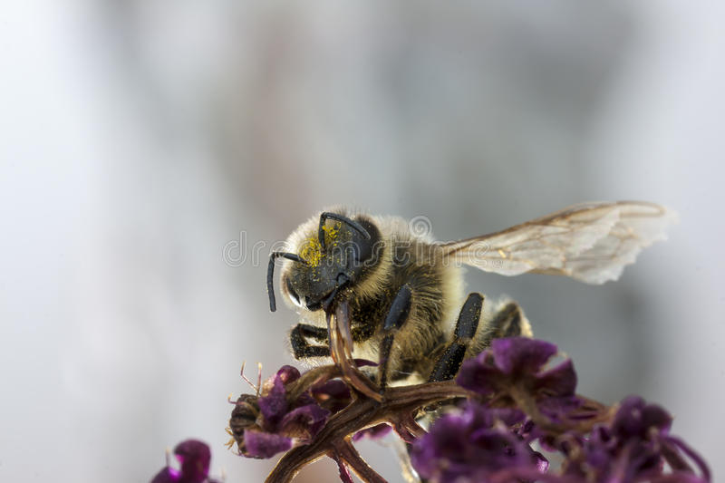 Pollen prysznic obraz stock