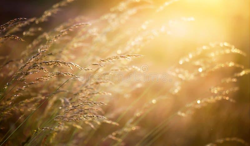 Pollen rośliny obrazy royalty free