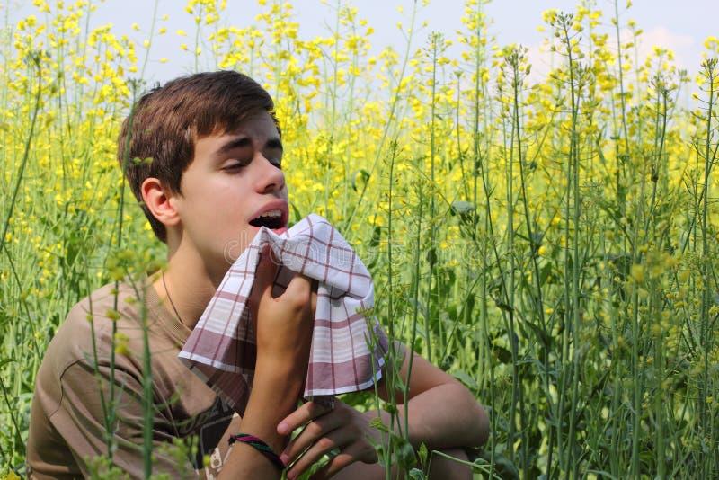 Pollenallergi fotografering för bildbyråer