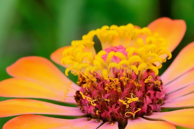 pollens imagens de stock royalty free