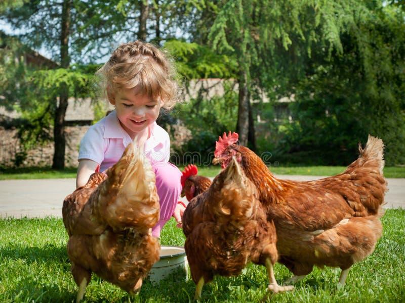 Polli d'alimentazione della ragazza fotografie stock libere da diritti