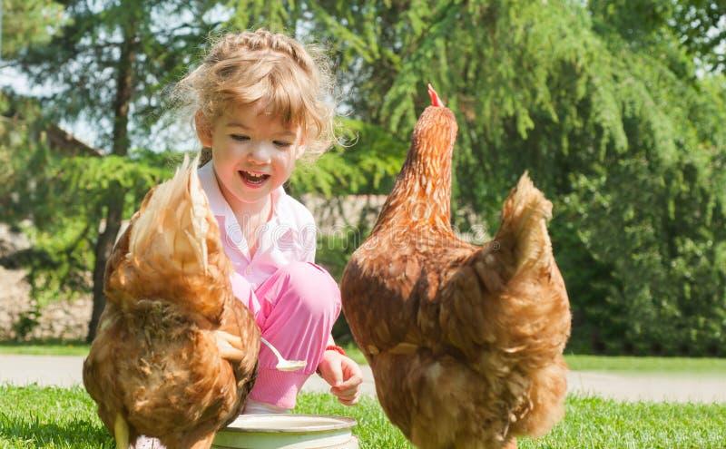 Polli d'alimentazione della ragazza immagini stock libere da diritti