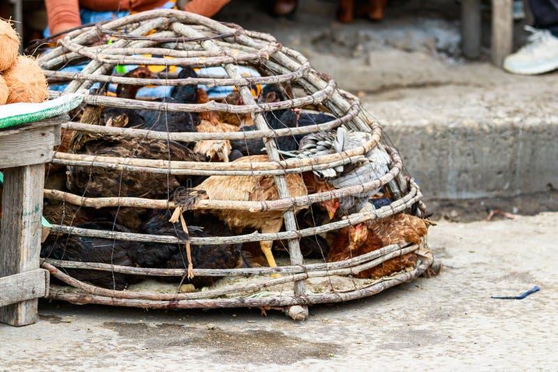 Polli vivi sulla via pronta ad essere venduto dai commercianti al mercato dell'alimento in Toliara madagascar fotografie stock libere da diritti