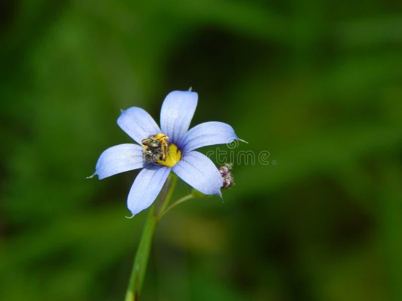 pollinating stock afbeeldingen