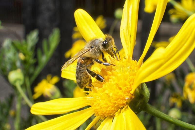 pollination royaltyfria foton