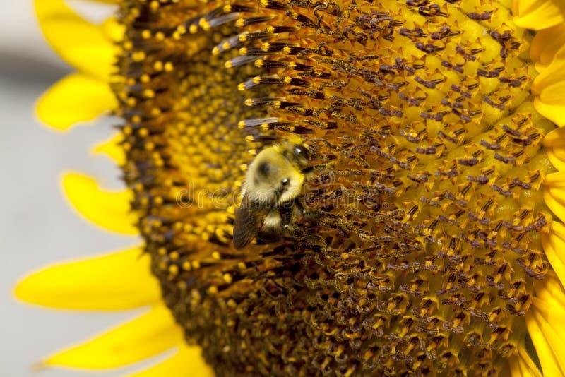 pollination стоковое изображение