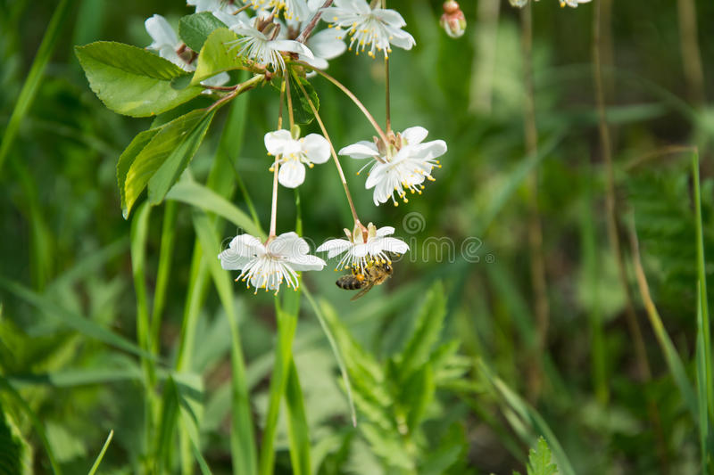 Pollination stock images