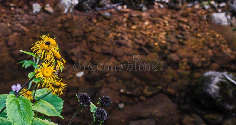 Pollination bredvid floden arkivbild