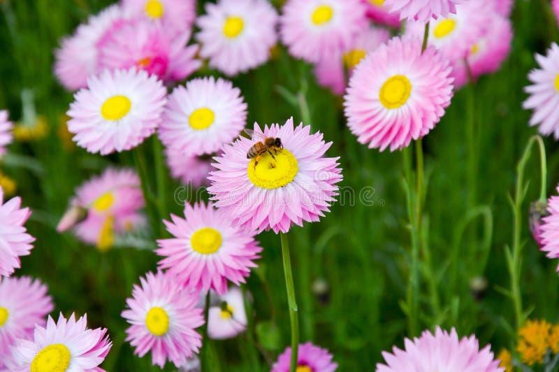 pollinator στοκ φωτογραφίες