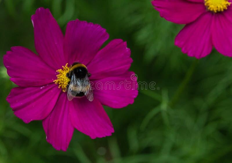pollinator στοκ φωτογραφίες με δικαίωμα ελεύθερης χρήσης