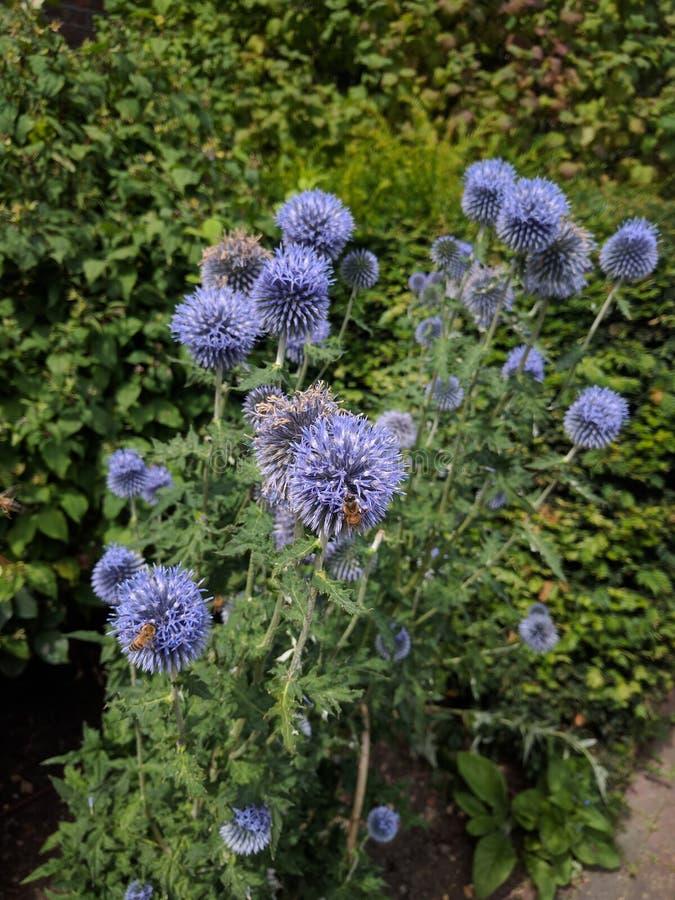 pollinators στοκ εικόνες με δικαίωμα ελεύθερης χρήσης