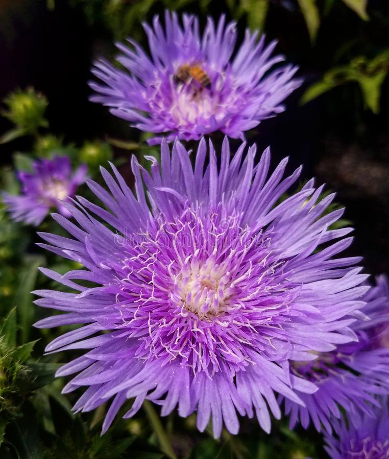 pollinisation photos libres de droits