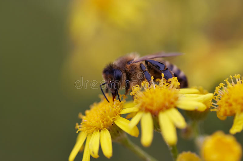 pollinisation images stock