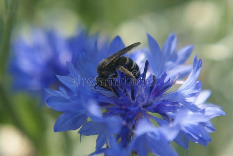 Pollinisation ! photo libre de droits
