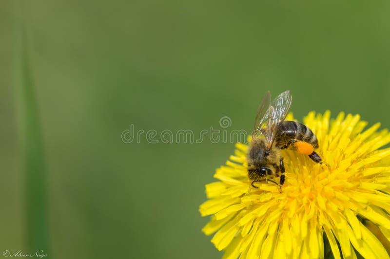 Pollinisation de ressort images stock