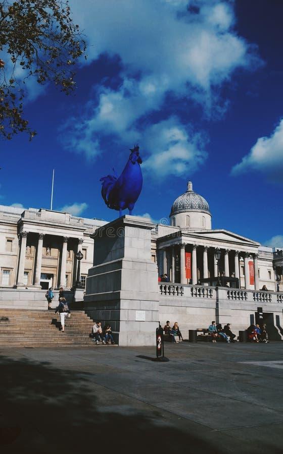 Pollo azul imagen de archivo