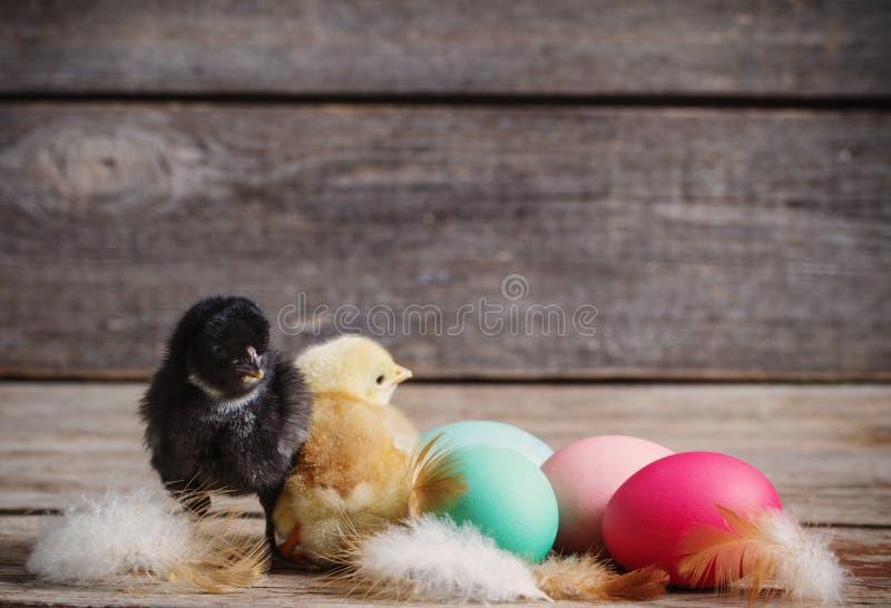 Pollo con los huevos de Pascua fotografía de archivo libre de regalías