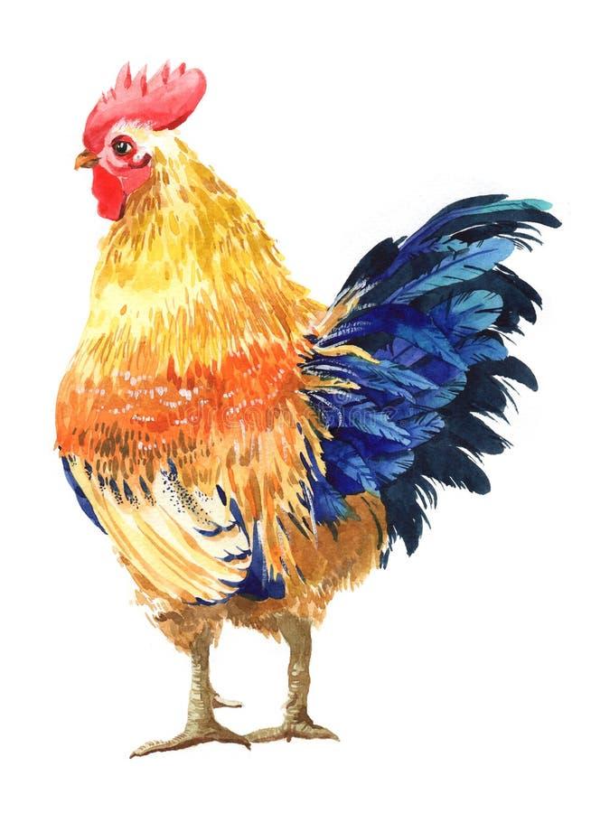 Pollo de la acuarela, gallo, p?jaro del gallo aislado fotografía de archivo libre de regalías