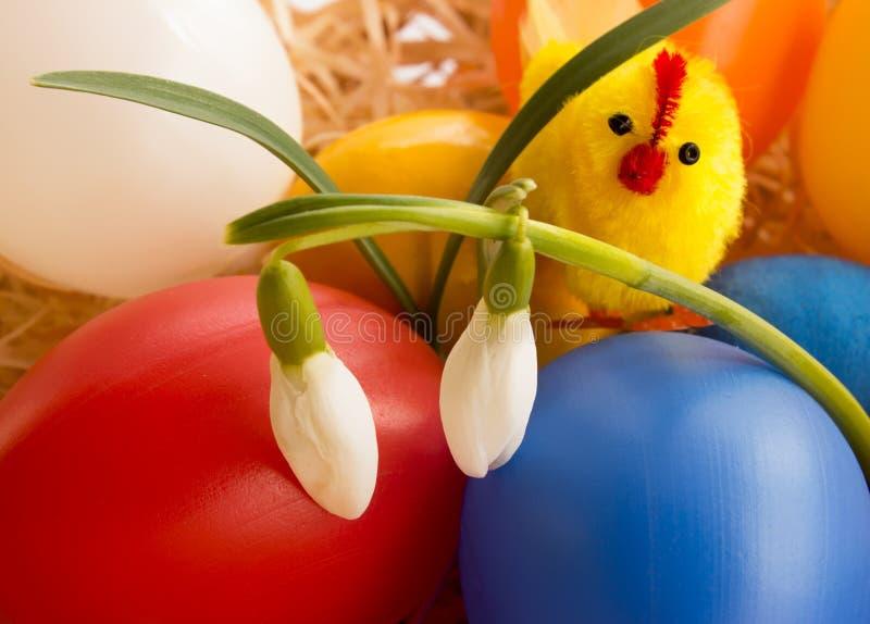 Pollo de los huevos de Pascua y primeros snowdrops de la primavera foto de archivo libre de regalías