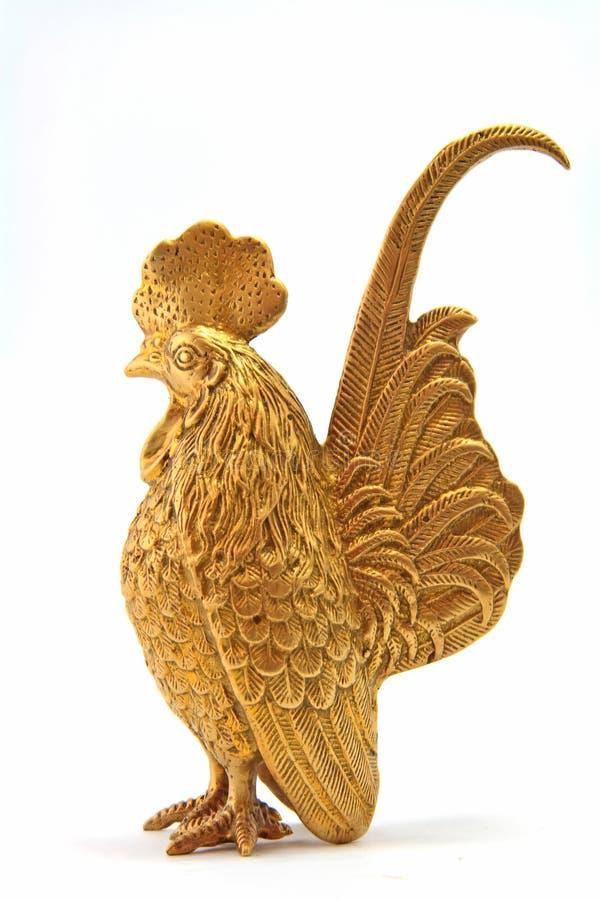 Pollo de oro fotografía de archivo libre de regalías