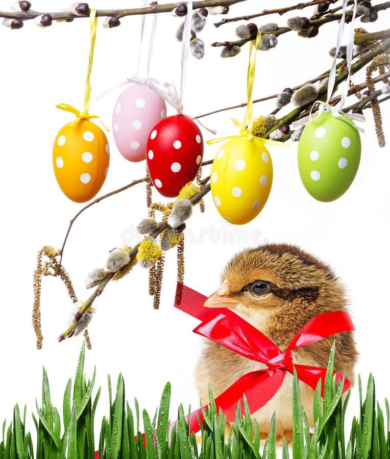 Pollo de Pascua imagen de archivo