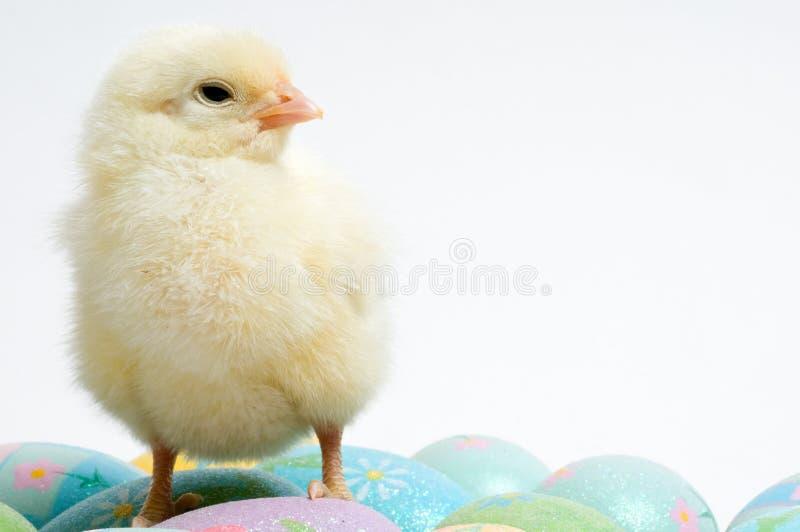 Pollo de Pascua en protector imagen de archivo libre de regalías