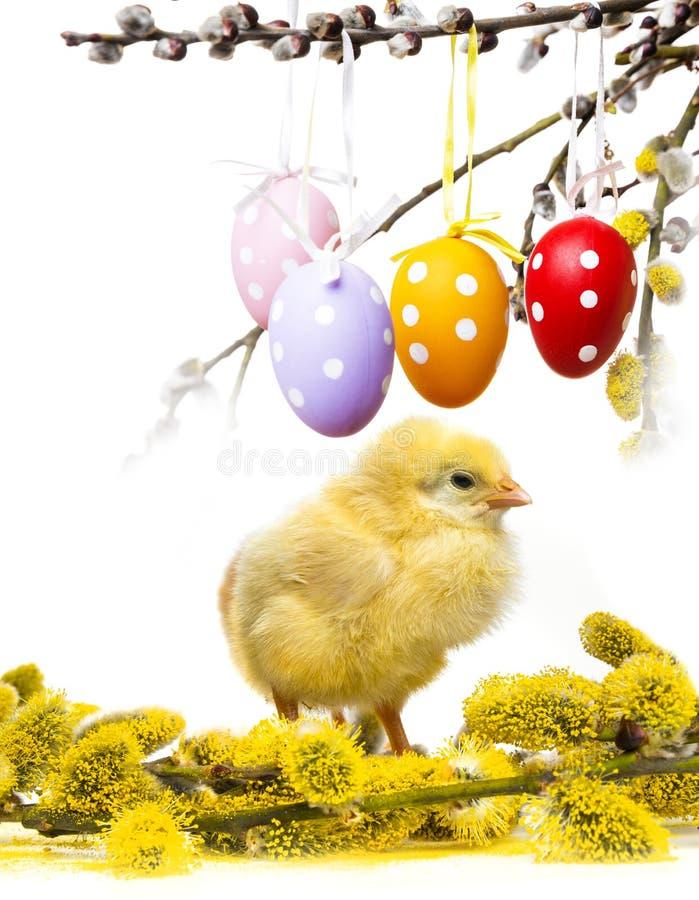 Pollo de primavera imagenes de archivo