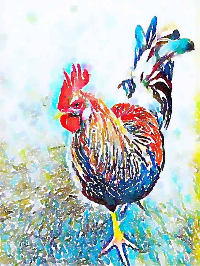 Pollo del gallo de la acuarela libre illustration