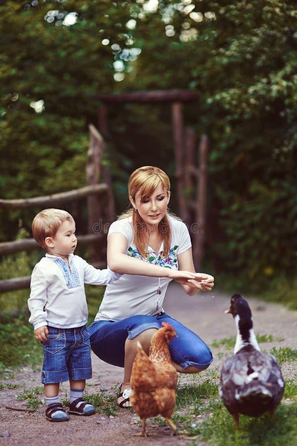 Pollo ed anatra d'alimentazione della famiglia sul pascolo fotografia stock libera da diritti