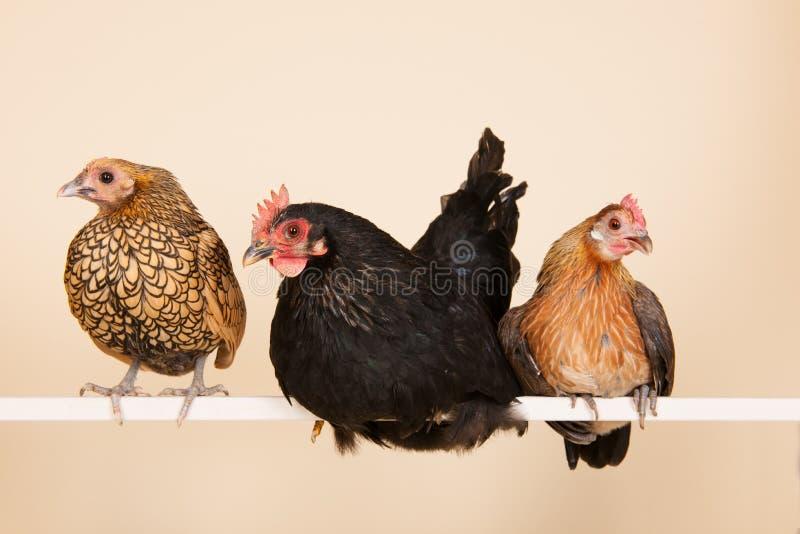 Pollo en el palillo foto de archivo libre de regalías