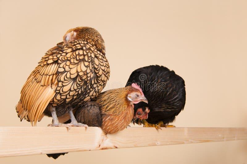 Pollo en el palillo imagenes de archivo